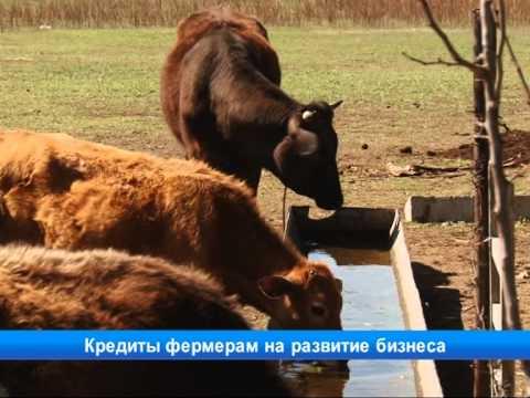 Кредиты фермерам на развитие бизнеса