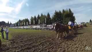 Marché Concours de Saignelégier 2014