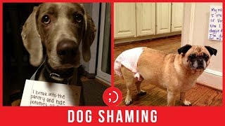 TRY NOT TO LAUGH - Funny Dog Shaming Compilation Videos