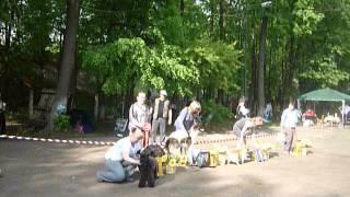19.05.12 Выставка собак г.Шуя,бэст ин шоу 3 часть