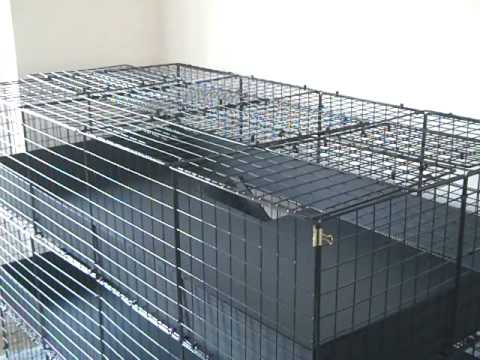 Huge c c guinea pig cage 3 level deluxe large custom for Making a c c cage