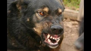 Читинцы боятся, что их насмерть загрызут собаки