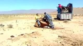 Вот так загрузить верблюда