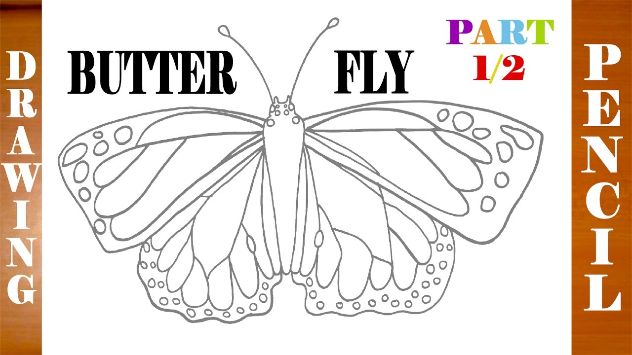 How to Draw a BUTTERFLY Step by Step Easy | Realistic ...