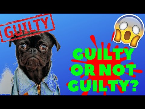 GUILTY DOGS - Funny Dogs Compilation 2019