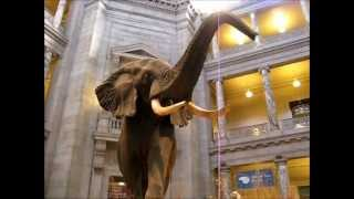 SMITHSONIAN INSTITUTION - Hall of Mammals - Natural History Museum - Washington, DC