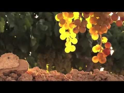Spanish Wine Types, Culture and Regions with this fun Spain wine travel video  © MagicalSpain.com