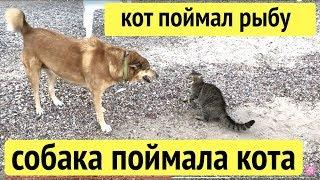 Кот поймал рыбу в море, а собака поймала кота!