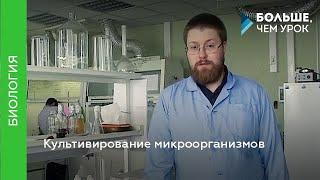 Культивирование микроорганизмов