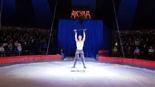 Акула цирк. Экстрим шоу