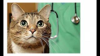 Стерилізація  тварин . Оваріоектомія