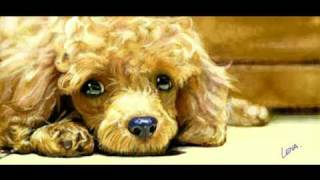 """toy Poodle"" Speed Painting (facebook Graffiti) Art By Lena P. #03"