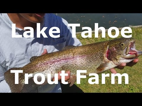 Lake Tahoe Trout Farm With Rodney Marquez