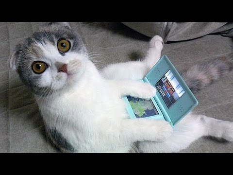 Cats are just the funniest pets ever - Funny cat compilation