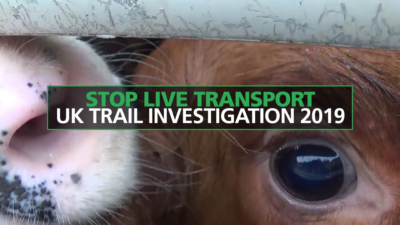 Take action to end long distance animal transport | Compassion in ...