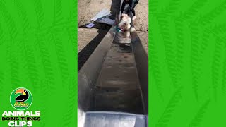 Cute Dog Goes Down a Slide | Animals Doing Things Clips