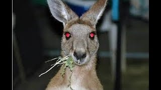 12 Most Mysterious Australian Creatures Ever Caught