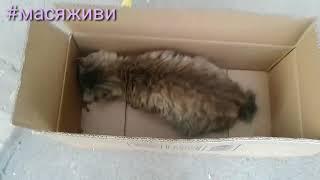 Спасение кошки/кошка умирает/#масяживи