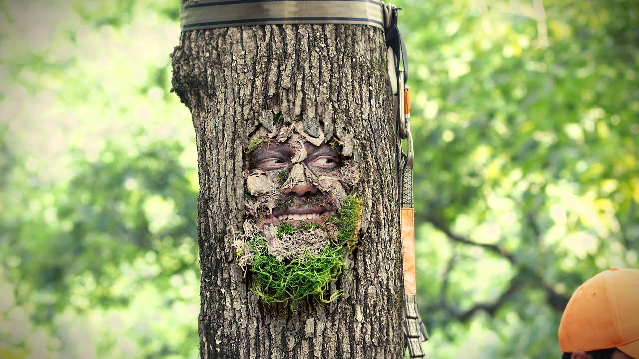Arkansas game and fish commission tree stand safety for Arkansas game and fish forecast