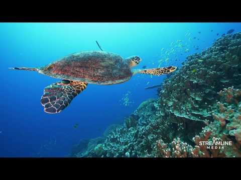 Christmas Island Underwater Paradise.