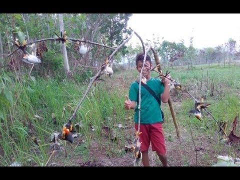 Pikat burung kolibri dapat banyak hanya menggunakan mp3 seru banget