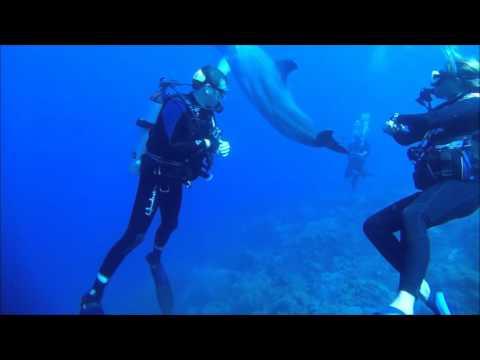 Curacao 2015 Duiken met een Dolfijn