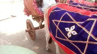 Bhadrawati Jagannath baba  palkhi pandaward