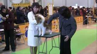 はじめての中部インター(富士山メッセにて) パピー戦.