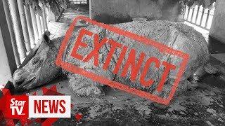 Malaysia's last Sumatran rhino Iman dies, species now extinct in the country