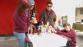 United Hope for Animals at Baldwin Park animal shelter
