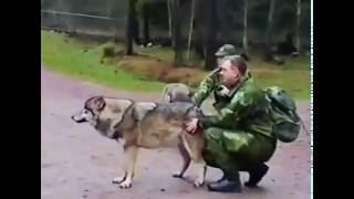 Волки и люди могут быть друзья