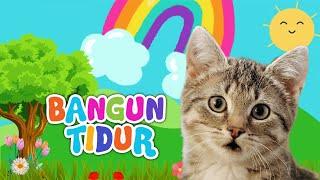 LAGU ANAK BANGUN TIDUR BERSAMA KUCING LUCU - LAGU ANAK INDONESIA POPULER