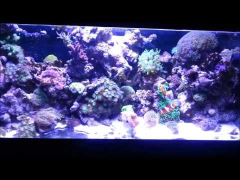 Trade Your Unwanted Livestock!!!(LFS/Oasis Tropical Fish Store)