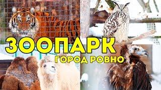 ЗООПАРК в городе Ровно: тигры, сурикаты, обезьяны и другие животные / SvinkiShow