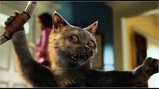 Такой драки котов вы еще не видели! 5 САМЫХ  ЭПИЧНЫХ КОШАЧЬИХ ДРАК | Коты дерутся (2019)