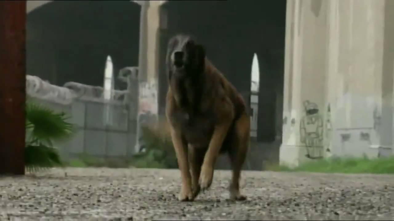 This Is Not Worst Case Scenario >> Worst-Case Scenario - Wütender Hund - YouTube