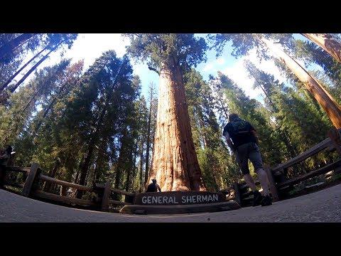 GoPro: Hiking in Sequoia National Park (Tokopah Falls, General Sherman Tree & Moro Rock)