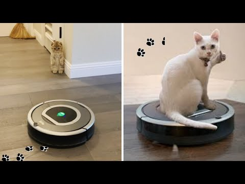 Roomba Cat Videos 2020 | Cat On Roomba | Roomba Riding Cat | Funny Cats