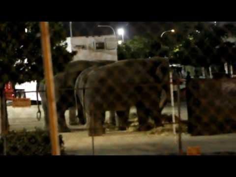 ringling-bros-circus-presents-dragons-2012-federal-violations