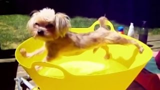 Funny Dogs Who Don't Want to Bath Compilation, Try Not To Laugh Aimals Videos, Animals TV