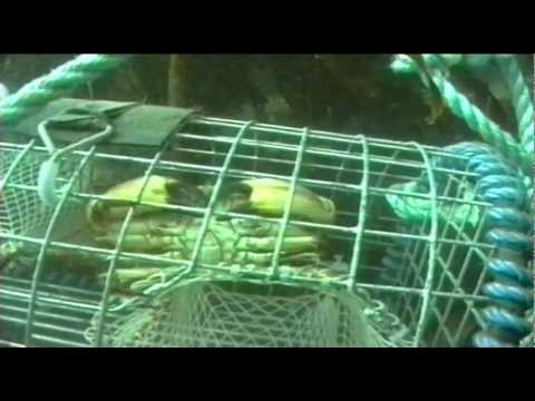 Shellfish Traps - The Inside Story (1998)