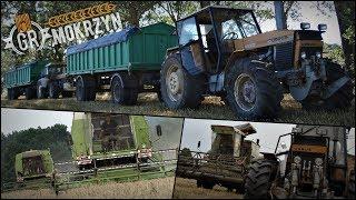 Żniwa 2019 w GR Mokrzyn [#2] ✔ Kosimy pszenżyto ozime, Odwożenie przyczep [ VLOG ]