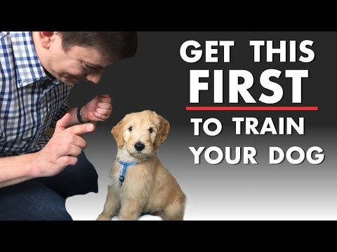 you'll-definitely-know-how-to-train-a-dog-if-you-get-this!