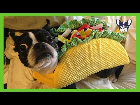 Funny Dogs in Costumes Compilation 👚👗👔