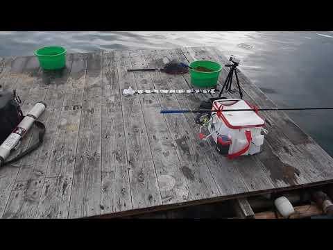 【カタタのいかだ】グレが釣れているボラ筏6号の紹介