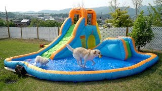 ENG SUB _ I Built a Water park in my Backyard for My DOGS! 🌊