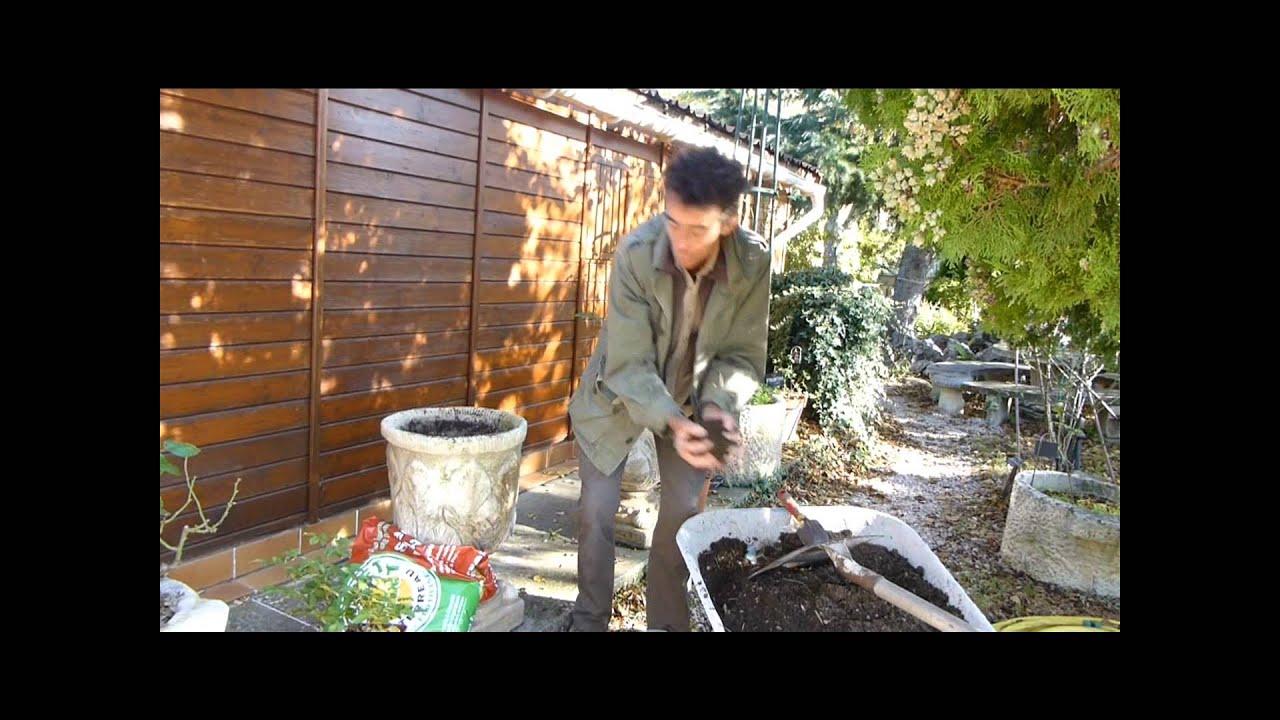 Planter un rosier en pot - YouTube
