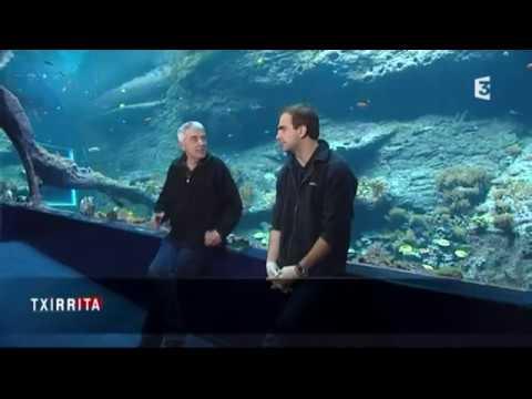 Une plongée au coeur de Biarritz Océan // Aquarium de Biarritz