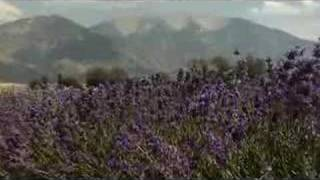 Young Living Lavender Farms Lavender Days 2007