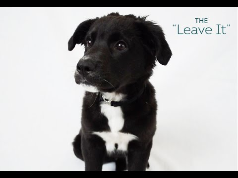 Dog Tricks Made Easy - The 'Leave It'